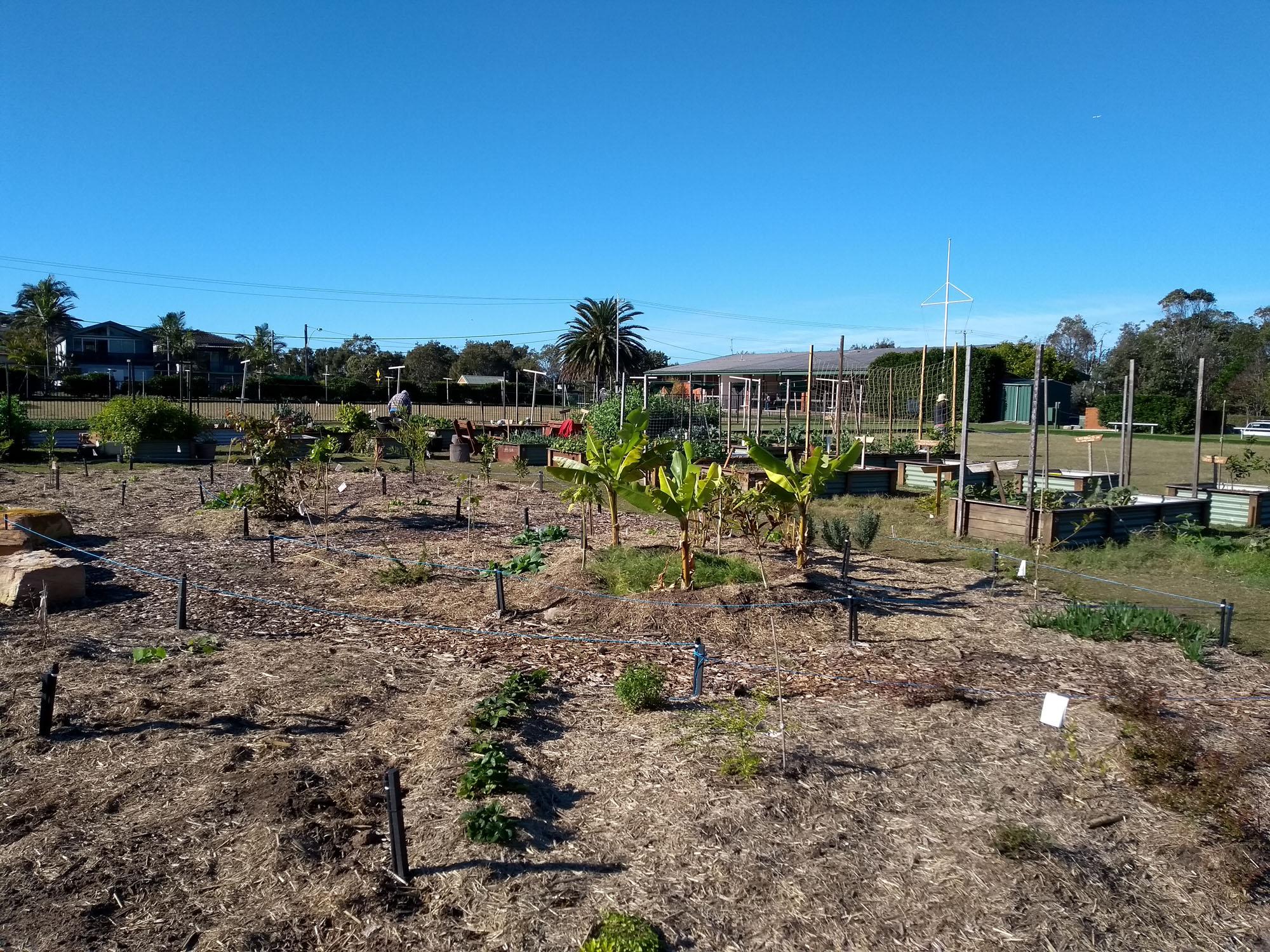 2018-16June-plantings