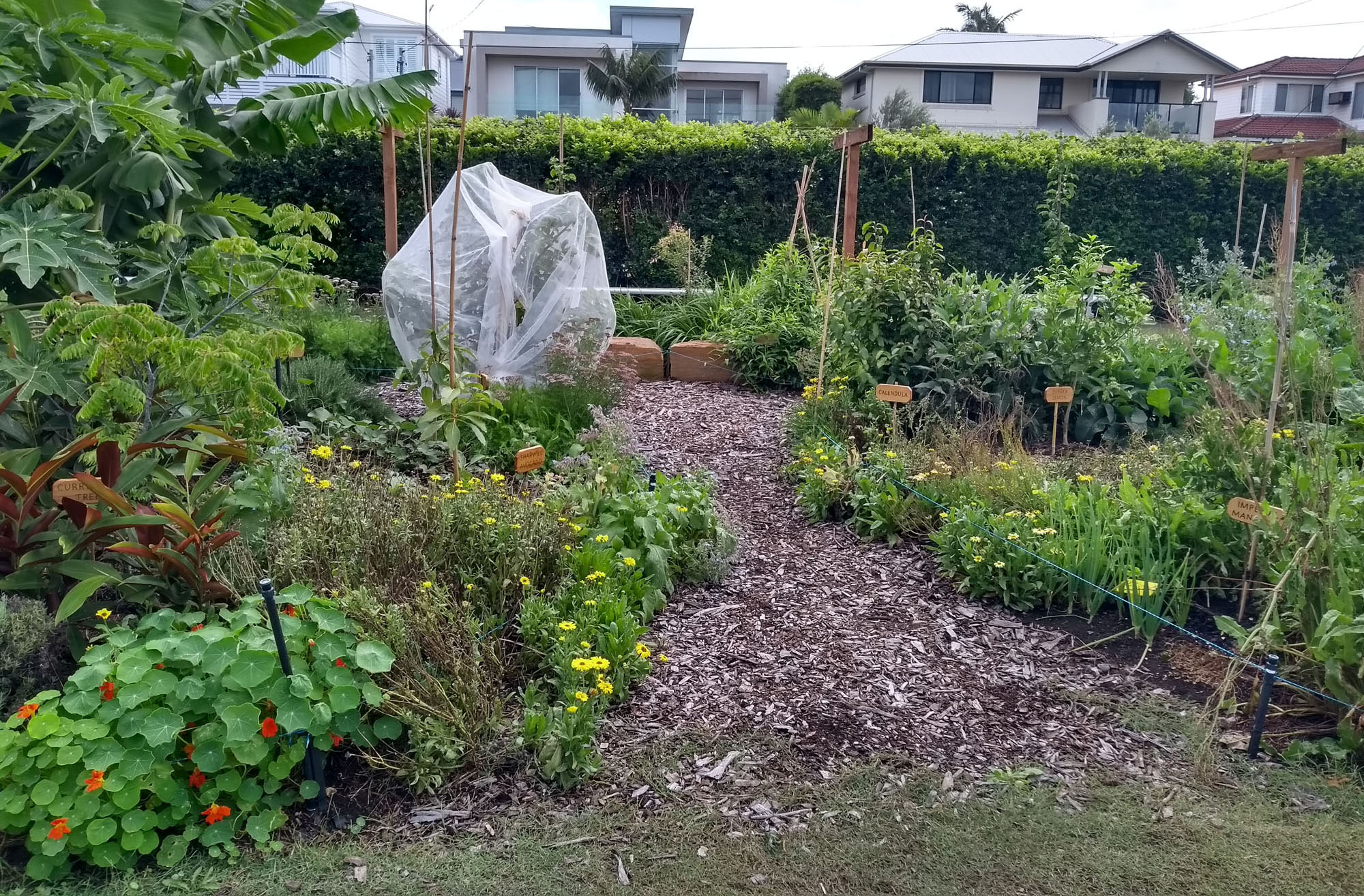2019-23Feb-FoodForest2