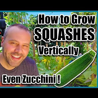 zucchiniVertical